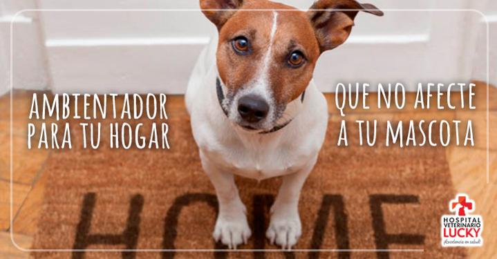 Ambientadores para casas con mascotas hospital veterinario lucky - Ambientadores para casa ...